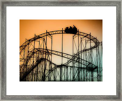 Wild At Night Framed Print by Colleen Kammerer