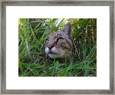 Wild Beast In The Long Grass Framed Print