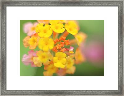Wild Beauty Framed Print