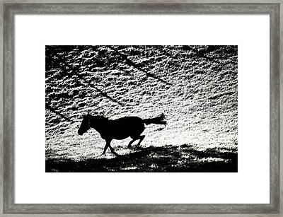 Wild Beauty. Black And White Framed Print by Jenny Rainbow
