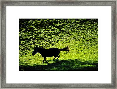 Wild Beauty. Color Framed Print