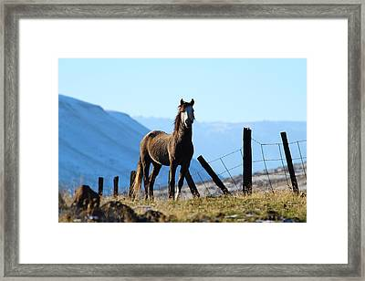 Wild Beauty Framed Print by Lynn Hopwood