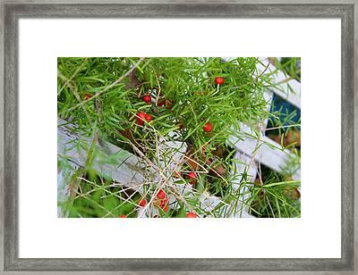 Wild Berries And Lattice Framed Print by Melissa Herrin
