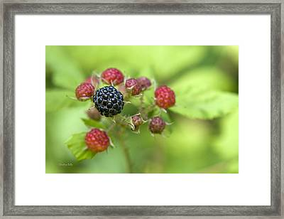 Wild Berries Framed Print by Christina Rollo
