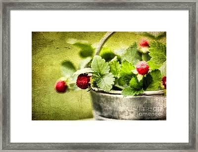 Wild Berries Framed Print by Darren Fisher