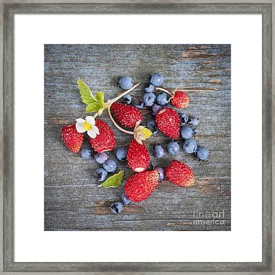 Wild Berries Framed Print by Elena Elisseeva