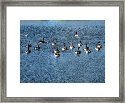 Wild Birds And Pond Framed Print