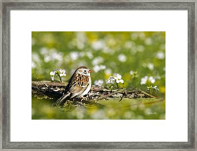 Wild Birds - Field Sparrow Framed Print by Christina Rollo