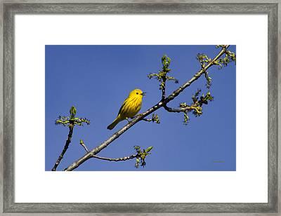 Wild Birds - Yellow Warbler Framed Print
