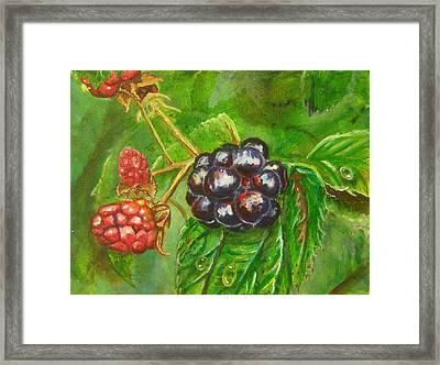 Wild Blackberries Framed Print