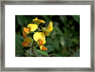 Framed Print featuring the photograph Wild Bonanza by Ramabhadran Thirupattur