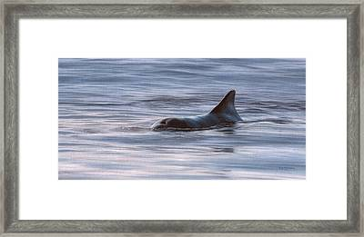 Wild Bottlenose Dolphin Painting - In Support Of The Sea Shepherd Conservation Society Framed Print