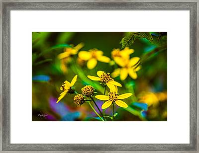 Flowers - Wild Bouquet  Framed Print by Barry Jones