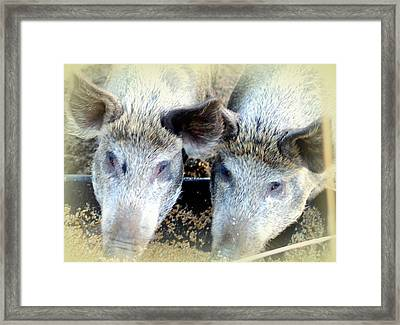 Not So Wild Brothers Having Dinner  Framed Print by Hilde Widerberg