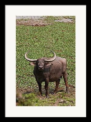 Kaziranga National Park Framed Prints