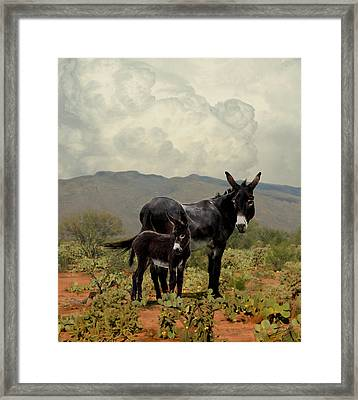 Wild Burros Of Tucson Framed Print by IM Spadecaller