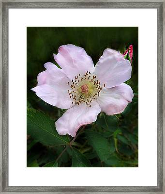 Framed Print featuring the photograph Wild Carolina Rose by William Tanneberger