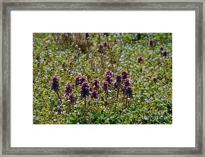 Wild Catnip Framed Print