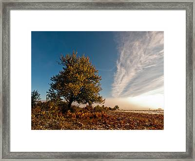 Wild Cherry Framed Print by Davorin Mance