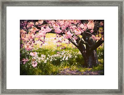 Wild Cherry Framed Print by Jessica Jenney