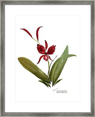 Wild Chinese Orchid #2 Framed Print by Alethea McKee