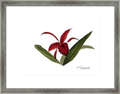 Wild Chinese Orchid #3 Framed Print by Alethea McKee