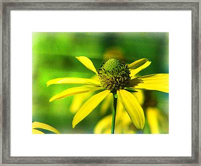 Wild Coneflower Secret Meadow Sandia Mountains Albuquerque New Mexico Framed Print