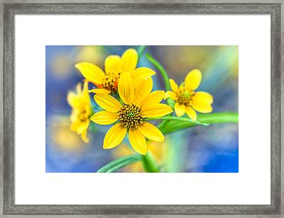 Wild Confederate Daisies On Arabia Mountain - North Georgia Framed Print by Mark E Tisdale