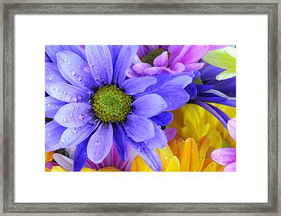 Wild Crazy Daisies 2 Framed Print by Kenny Francis