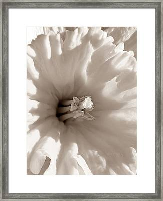 Wild Daffodil Framed Print by Chris Berry