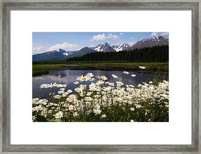 Wild Daisies Colour The Roadside Framed Print by Doug Lindstrand