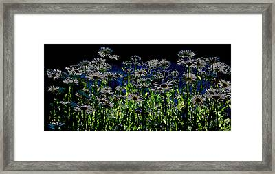 Wild Daisies Framed Print by David Patterson