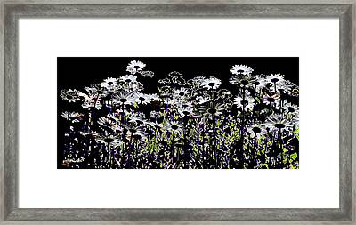 Wild Daisies II Framed Print by David Patterson