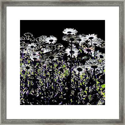 Wild Daisies IIi Framed Print by David Patterson