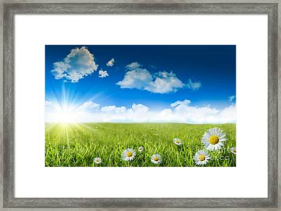 Wild Daisies In The Grass With A Blue Sky Framed Print by Sandra Cunningham