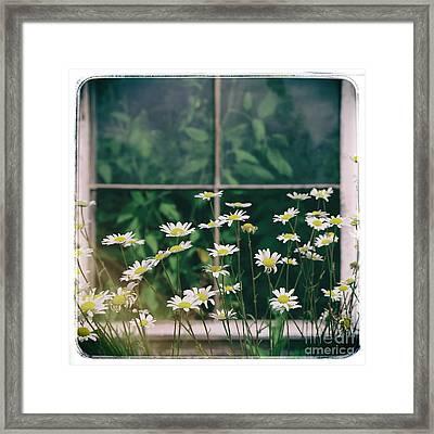 Wild Daisies Framed Print