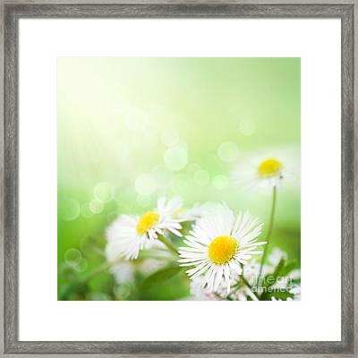 Wild Daisies Framed Print by Mythja  Photography