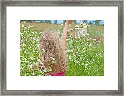 Wild Daisy Field Framed Print by Maria Dryfhout