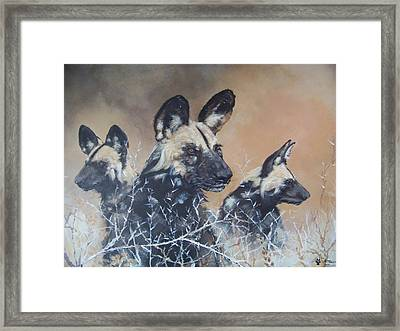 Wild Dog Trio Framed Print by Robert Teeling
