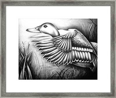 Wild Duck Framed Print