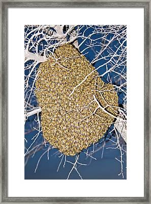 Wild European Honey Bee Beehive Framed Print