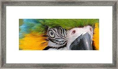 Wild Eyes - Parrot Framed Print