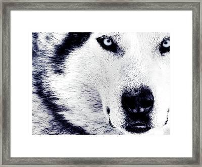 Wild Eyes Framed Print by VRL Art
