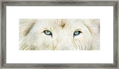 Wild Eyes - White Lion Framed Print
