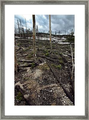 Framed Print featuring the photograph Wild Fire Aftermath by Amanda Stadther