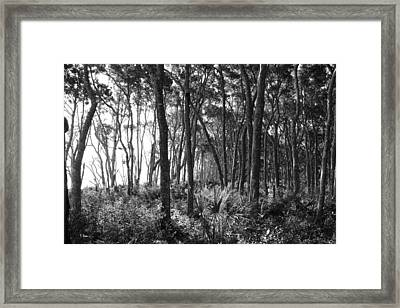 Wild Florida Framed Print by Thomas Leon