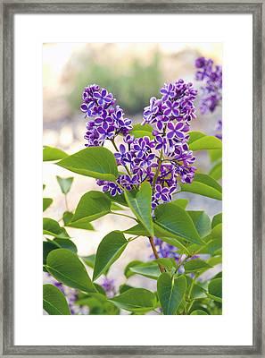 Wild Florwers - Lake Tahoe Framed Print