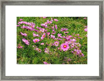 Wild Flower Framed Print by Anna Liza Jones
