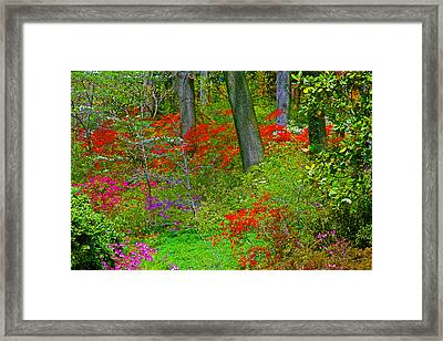 Wild Flower Garden Framed Print by Andy Lawless