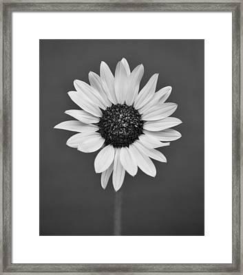 Wild Flower Framed Print by Kjirsten Collier